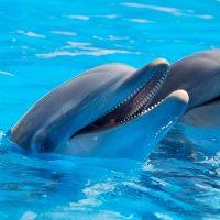 dolphins post soulsavvi
