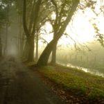 mist small