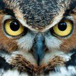 Bird & Animal Web Cams – Live & Recorded