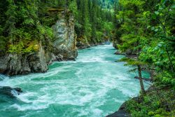 river between green leafed tree 1766838